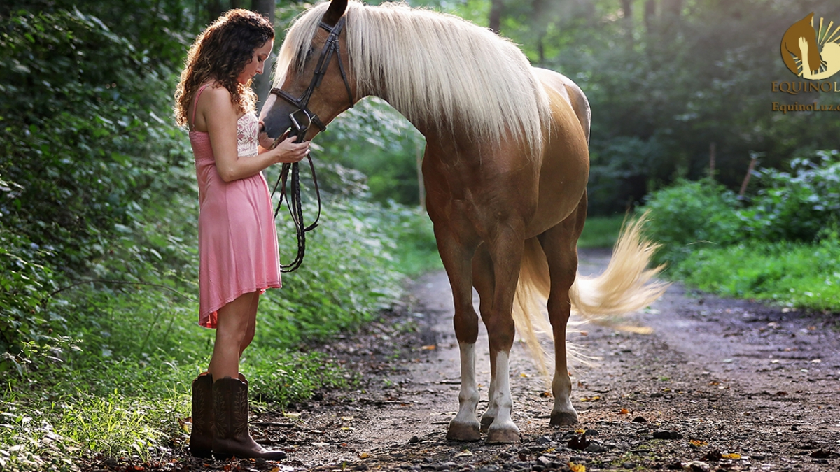 beautiful-daylight-equestrian-1090408